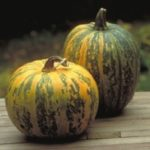 Health Benefits of Pumpkin Seed Oil