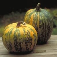 pumpkin-seed-oil