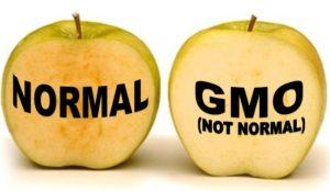 Arctic-Apple-GMO