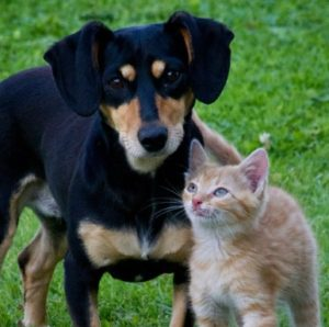 Pet-Love-Cat-Dog